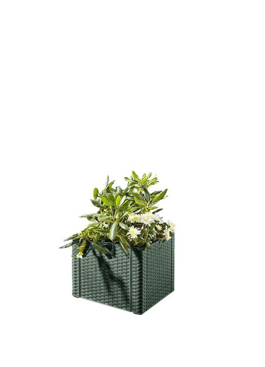 Pflanzkasten mit Spalierwand in verschiedenen Ausführungen - Blumentöpfe und Pflanzgefäße ...
