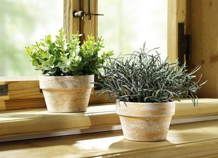 Kunstpflanzen Textilpflanzen Online Kaufen Brigitte Hachenburg